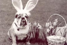 Ꮛa§tᏋr / Easter Bunny ~ Bunny Hop ~ Easter and Everything Spring!! / by Jeanine Hill Spinelli