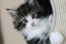 cute cats / by PLACE-A .COM