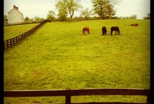 H is for Horses / by Deb Martin-Webster