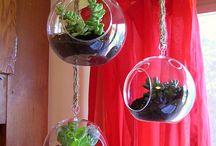 Terrariums and airplants / by Susanna Eslin