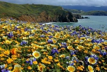 Mori Point / by Golden Gate National Recreation Area