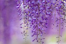 Lavender / by Gia Milazzo Smith / Designs By Gia Interior Design