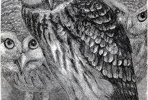 I Love Owls / by Naomi Padilla