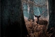 Tangled Woods / by Morgan Koch