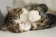 MEOWsome cats! =^. .^= / by Deborah Kluczinsky