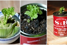 The Green Thumb that is me. / by Stephanie Beacher