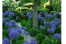 jardines / by Luzde Lourdes Rocha Bravo