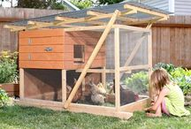 i want a CHICKEN COOP! / by Monica Manning