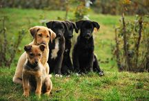 Dogs/MyInspiration / by Carla Bolaños