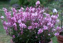 Zone 10 Plants that are Drought Tolerant / by Karen Shamalamamama