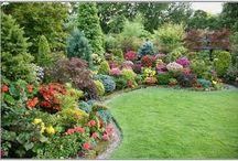gardening/home / by Rebecca DeMuth