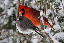 Redbirds (as my Grandmother called Cardinals) / Cardinals, in remembrance / by Dt Garden Girl