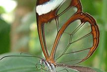 Bugs and Critters / by Laurie Sawatzke