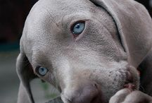 Wacky Weims / by Gail McGuire