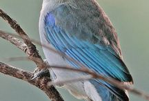 Beautiful Birds / by Deneen Azzolino