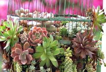 Plants / by Erica Sexton