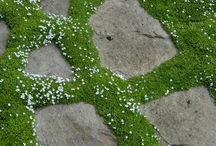 Parking strip garden design / Grass is boring!  Make over your parking strip :)  Devoted to that tricky landscaping bit known as the parking strip. / by Megan Hawley