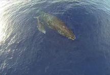 Drone Videos / Videos of drones in Hawaii. / by Hawaii Drones