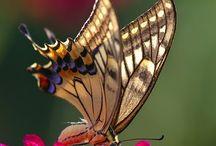 Butterflies / by Francine Ali
