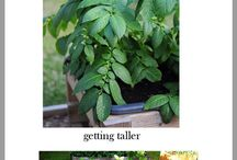 <3 Green Thumb Tips / by Kate Overton