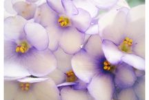 purple / by Jack Tinney