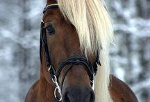 Horses / by Fabienne Janvier