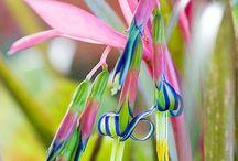 flowers / by Joy Allen