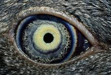 Eyes / by San Sabba