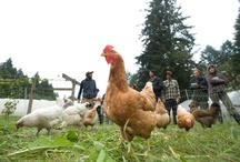 The Organic Farm / by The Evergreen State College
