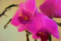 zg ase rose rb  / by aspen rose arts