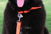Dogs Dogs Dogs !!!! / by Susie Terherst-Ramey