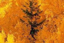 Awesome Autumn / by Karen Severson