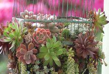 Plantes, fleurs et cactus / by Sofi Binet