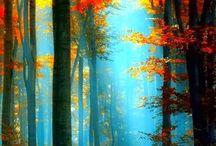 Fantastically Fall / by Natalie Kinash