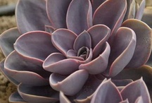 Succulents with names / by Margo Bangert