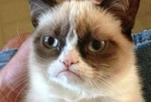 Grumpy Cat / by Rosanna West