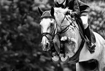 Everything Equine / by Katie Westfall