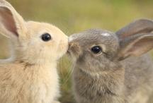 cute! / by Sara Lopez
