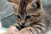 I can has kitty? / by Dana Bee