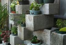 Garden / by Miranda Brannon
