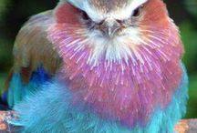 Birds  / Birds from all over the world. / by Nikki Furr Carter