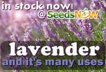 SeedsNow.com Products!  / Some of the fun and new products we are offering over at SeedsNow.com / by SeedsNow.com