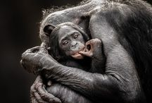 Ohhh...Animals.... / by Rue Hass