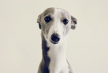 skinny dogs and other creatures / by Chante Siciliano