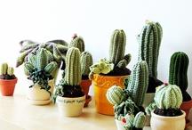 Gehaakte cactussen / by Nancy De Budt