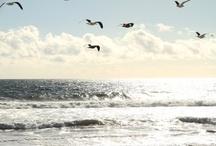 | beach / ocean / sea | / by Cheryl Haseman
