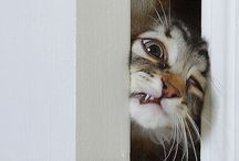 Can't Help But Laugh / by Lauren Schramek