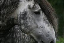 Beautiful Horses & Donkeys / by Nisha Umbarger