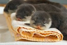 too cute animals / by Kelsea Linney