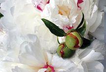 Flower / by Honey Wahyuni